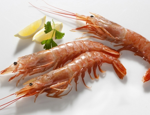 Red Shrimps Exporters India